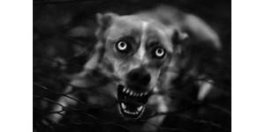 Какой отпугиватель собак купить?