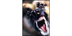 Современные методы защиты от агрессии собак