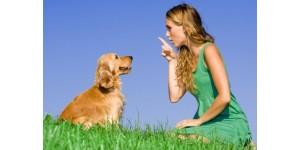 В каких ситуация применять отпугиватель собак?