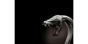Отзывы пользователей и покупателей об отпугивателях змей