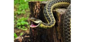 Змеи и методы борьбы с ними