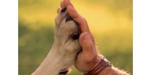 Использование отпугивателя собак при дрессировке